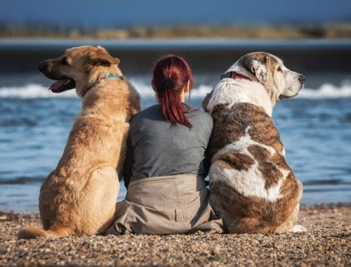 woman with two dogs